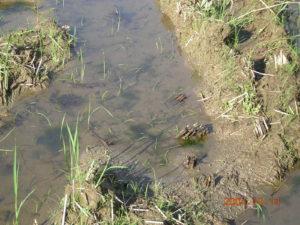 コナギの種は多くあっても、土壌の多重構造により出芽できない状況であったことが推測された。
