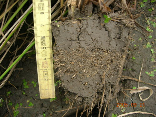 雑草制御水田における収穫期の土壌断面の様子2
