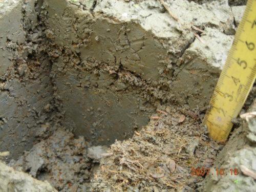 自然農法雑草制御水田 土壌断面1