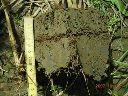 自然農法雑草制御水田 土壌断面2