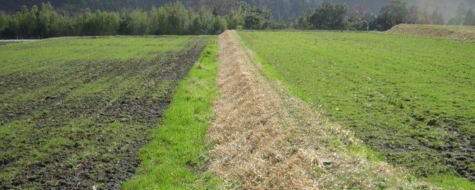 自然農法無農薬栽培の田んぼ 水はけが異なる2圃場の様子