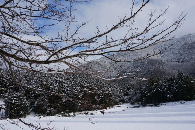 田んぼに雪積もる
