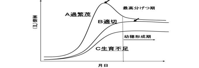 図5 自然農法無農薬栽培の稲の茎数の推移